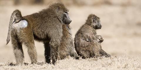 3-Day 2 Nights Tsavo West and Amboseli Safari Package