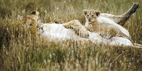 11-Day Kenya | Amboseli, Mara & More | Private