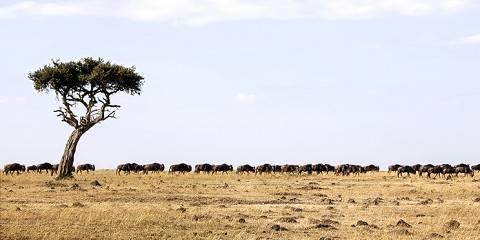8-Day Kenya Private Mid Range Safari & Shanzu Beach Tour