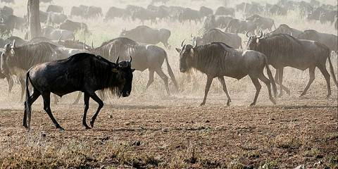 8-Day The Great Migration Safari in Style (2018/2019)