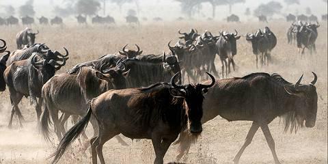 10-Day Tanzania and Kenya Spectacular Migration Safari