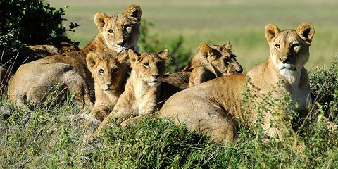 5-Day Masai Mara, Naivasha and Nakuru - Cruiser - Luxury