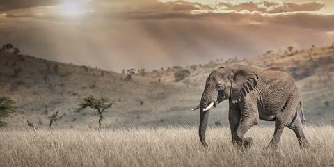 3-Day Wild Elephants Mid-Range