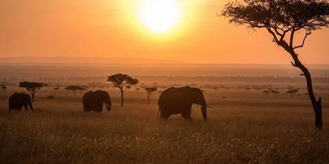 7-Day Masai Mara/ Lake Naivasha / Lake Nakuru/ Amboseli
