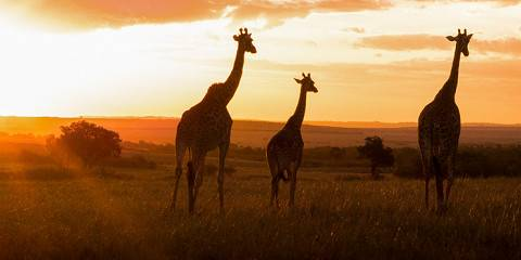 7-Day Kenya Luxury Tour North to South in Landcruiser