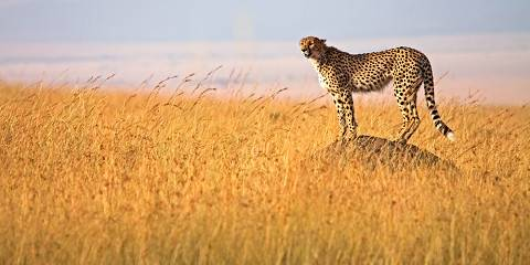 4-Day Lake Nakuru and Masai Mara Luxury Safari