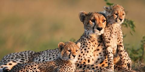 3-Day Meru National Park Safari Trip