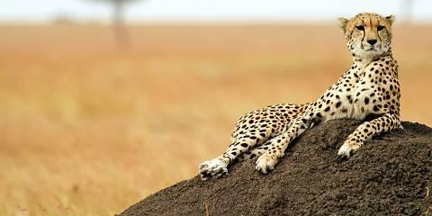 4-Day Kenya Premium Safari