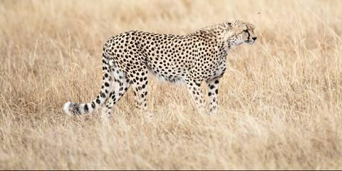 7-Day Best of Kenya Luxury Safari (Sarova Experience)