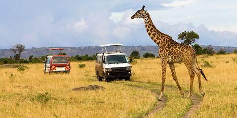 7-Day Budget Maasai Mara Naivasha Lake Nakuru Amboseli