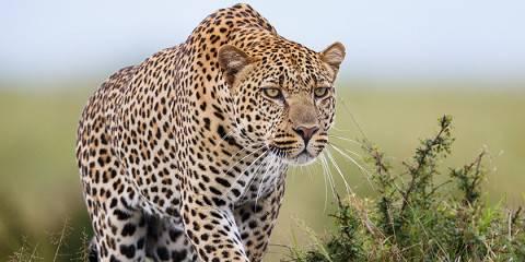 3-Day Private Safari Living Among the Masai Mara Lions
