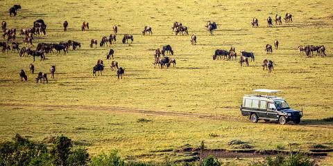 7-Day Masai Mara, L Nakuru, L, Naivasha, Amboseli, Mid