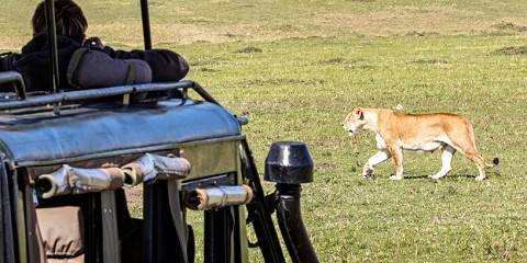 4-Day Safari Luxury Extravangaza