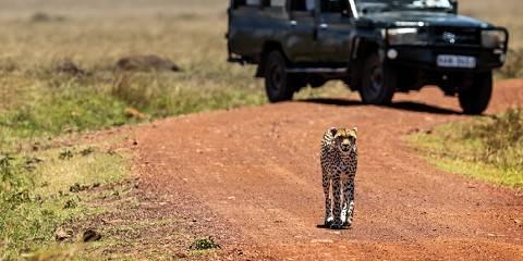 7-Day Aberdare Lake Nakuru Masai Mara Samburu Tour