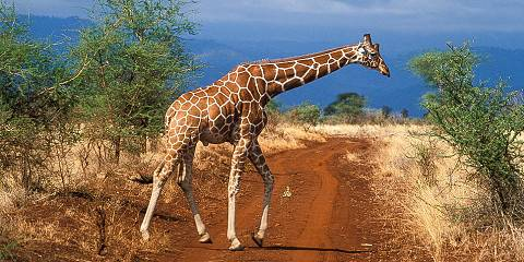 7-Day Safari (Including Maasai Mara) & Mombasa Extension