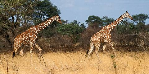8-Day Hidden Treasures Safari