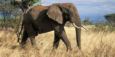 4-Day Amboseli and Masai Mara Budget Safari