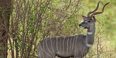 12-Day Kutazama Safari