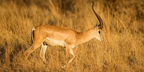 5-Day Tsavo East, Ziwani , Amboseli and Salt Lick