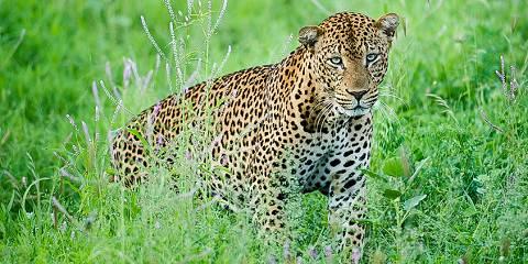 5-Day Masai Mara-Nakuru-Naivasha Safari