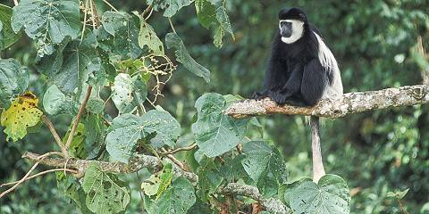 6-Day Tanzania Northern Circuit Camping Safari