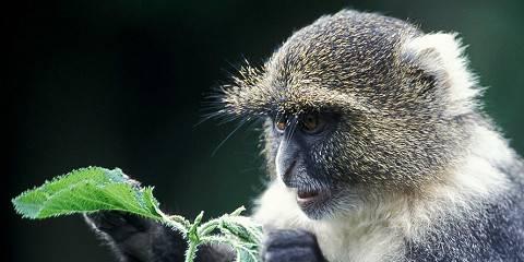 7-Day Exclusive Sweetwaters Samburu Nakuru Mara Safari