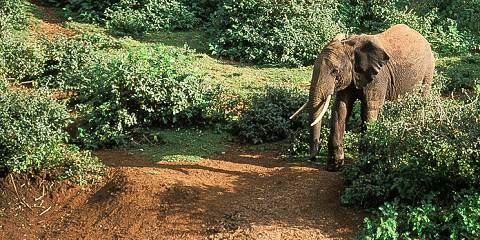 7-Day Travel for Change Classic Kenya