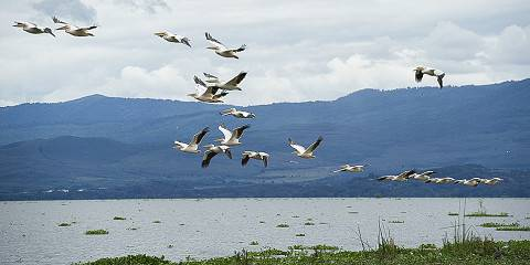 9-Day Samburu Nakuru Naivasha Masai Mara Amboseli Safari