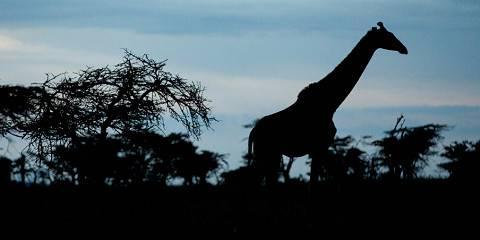 10-Day Kenya Private Honeymoon Safari-Luxury-Landcruiser