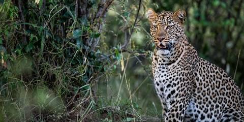 6-Day Meander Kenya Highlight Safari