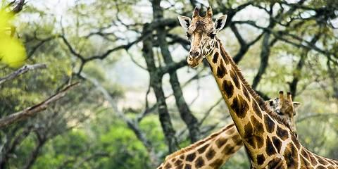 10-Day Kenya Safari: Wildlife & Warriors