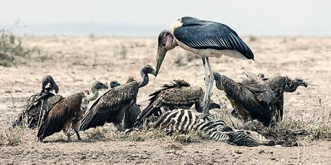 14-Day Kenyan Wildlife Discovery Trip