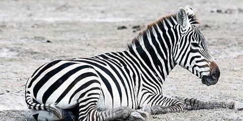 3-Day Amboseli National Park - Land Cruiser - Premium