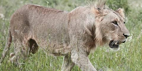 5-Day Safari to Masai Mara-Nakuru