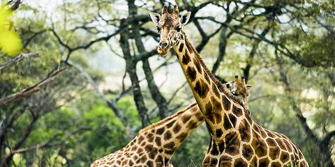 5-Day Masai Mara-Nakuru-Naivasha-Joining Group Budget