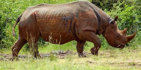 2-Day Lake Nakuru National Park mid Range Safari