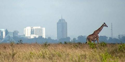 1-Day Nairobi National Park