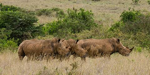 3-Day Masai Mara Budget Tour Kenya