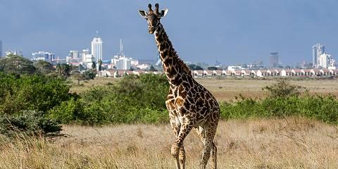 8-Day Wonders of Kenya & Tanzania - High End