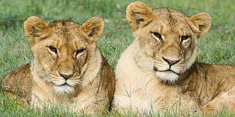 3-Day Cruiser Mara Safari Daily Departure+Airport Trsfs