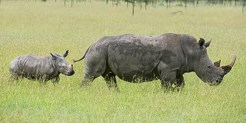 7-Day Masai Mara /Amboseli/L Naivasha/Nakuru Road Trip