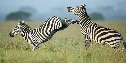 ½-Day Nairobi National Park & Giraffe Centre Safari