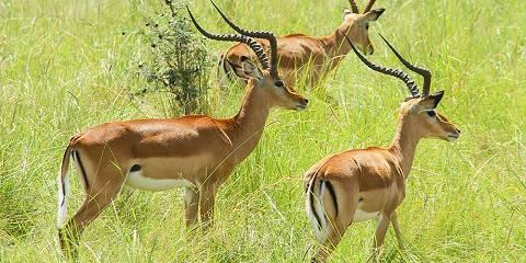 8-Day Cheetah Safari