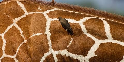 3-Day Tsavo East National Park - Safari Van - Budget