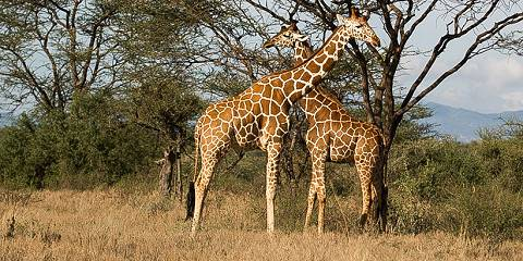 16-Day Kenya Discover Wildlife Nature and Beach Safari