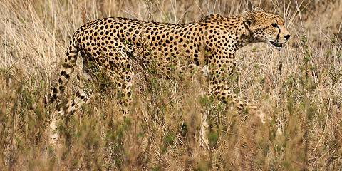 3-Day Masai Mara Special (Private Safari)