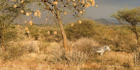 3-Day Amboseli -Tsavo East -Mombasa/Diani Private Safari