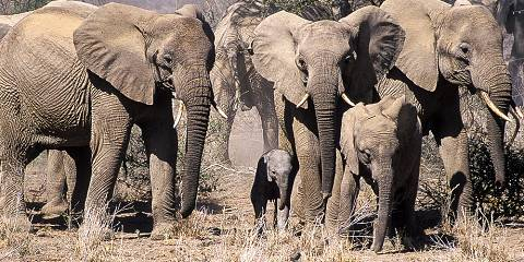 3-Day Amboseli National Park Safari Tour