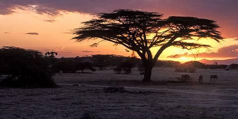 8-Day Kenya Wildlife Safari Holiday