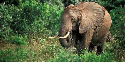7-Day Luxury Kenya Safari Holiday